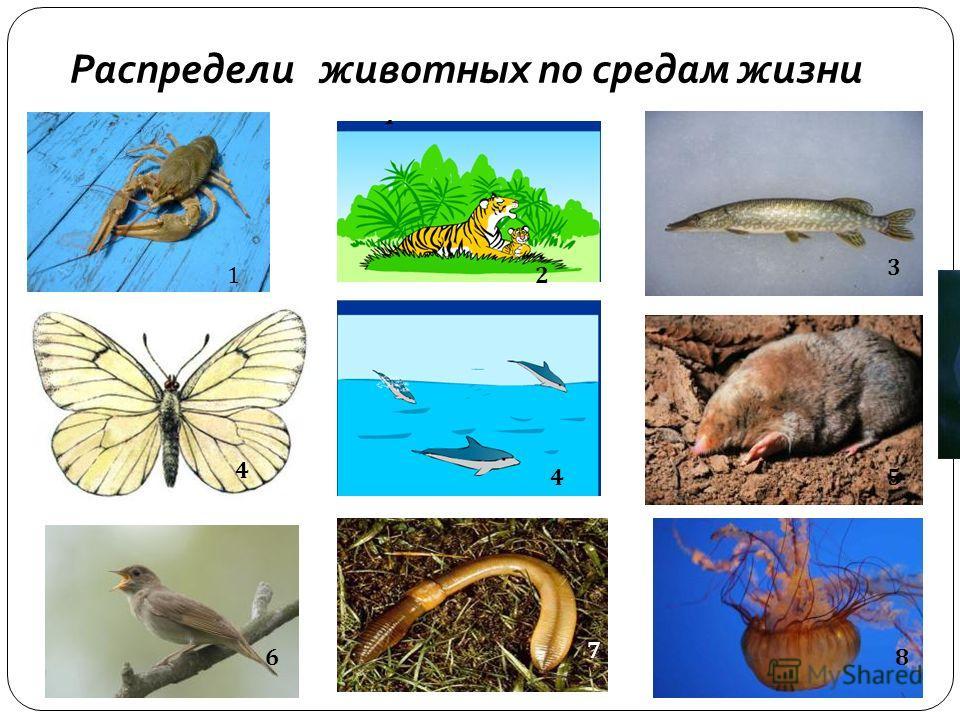 Распредели животных по средам жизни 6 7 8 12 3 4 4 5