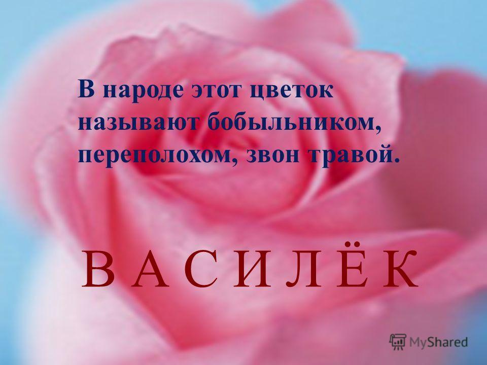 В народе этот цветок называют бобыльником, переполохом, звон травой. В А С И Л Ё К