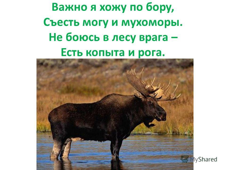Важно я хожу по бору, Съесть могу и мухоморы. Не боюсь в лесу врага – Есть копыта и рога.