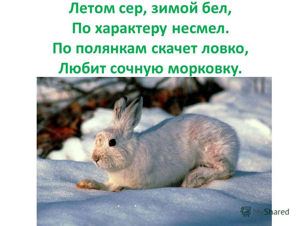 Летом сер, зимой бел, По характеру несмел. По полянкам скачет ловко, Любит сочную морковку.