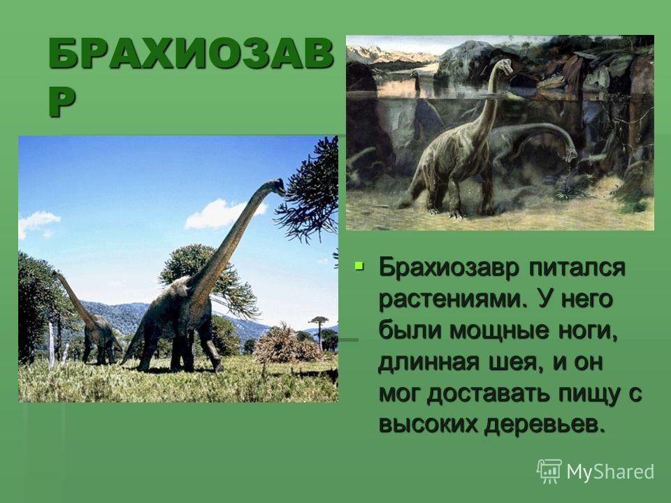 БРАХИОЗАВ Р Брахиозавр питался растениями. У него были мощные ноги, длинная шея, и он мог доставать пищу с высоких деревьев. Брахиозавр питался растениями. У него были мощные ноги, длинная шея, и он мог доставать пищу с высоких деревьев.