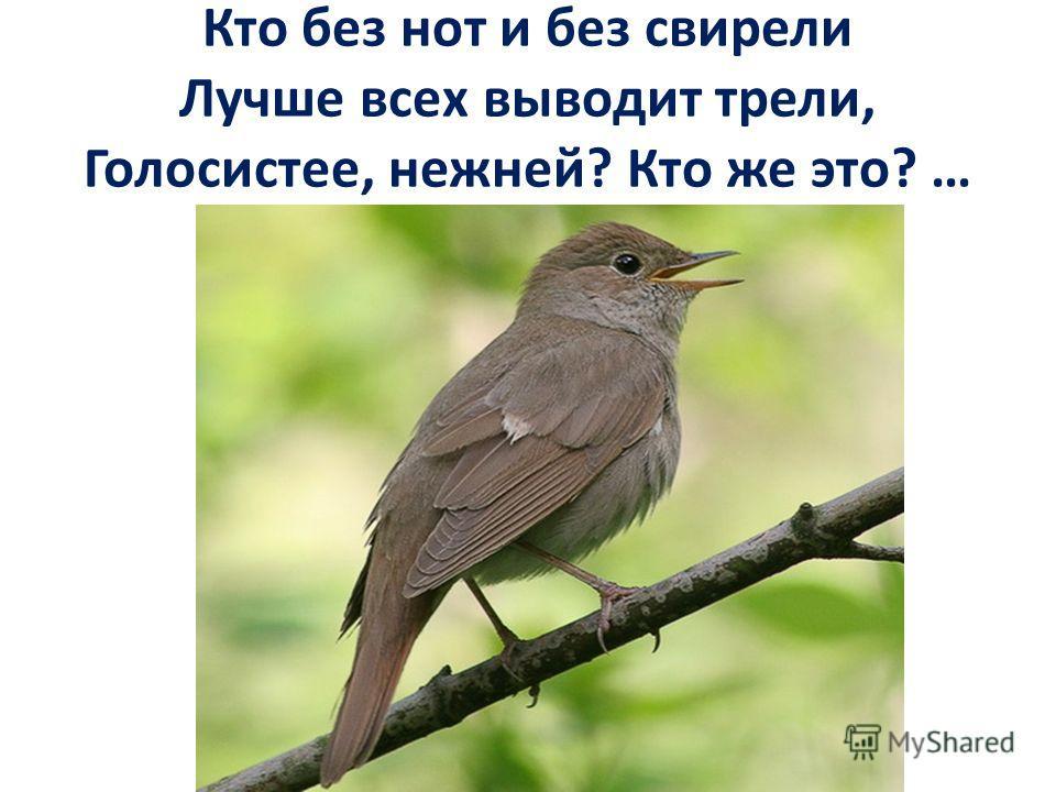 Кто без нот и без свирели Лучше всех выводит трели, Голосистее, нежней? Кто же это? …
