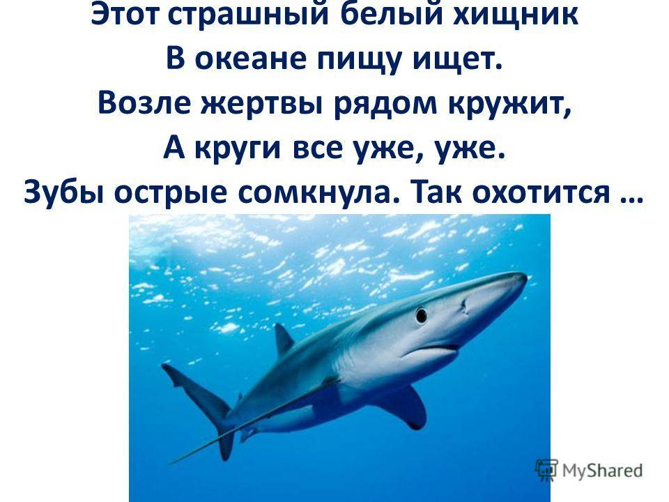 Этот страшный белый хищник В океане пищу ищет. Возле жертвы рядом кружит, А круги все уже, уже. Зубы острые сомкнула. Так охотится …