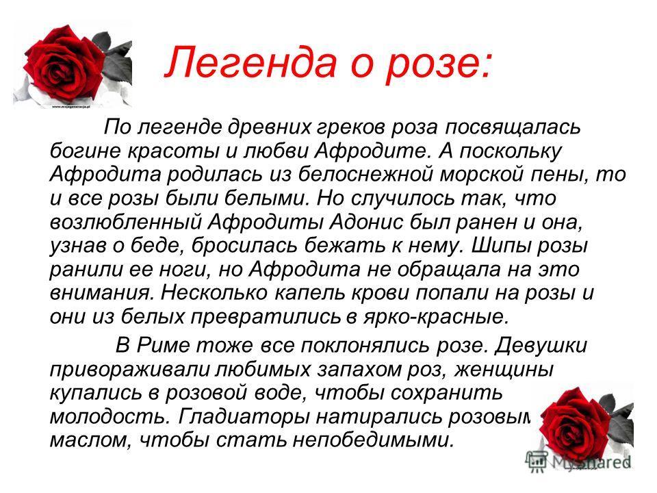 Легенда о розе: По легенде древних греков роза посвящалась богине красоты и любви Афродите. А поскольку Афродита родилась из белоснежной морской пены, то и все розы были белыми. Но случилось так, что возлюбленный Афродиты Адонис был ранен и она, узна