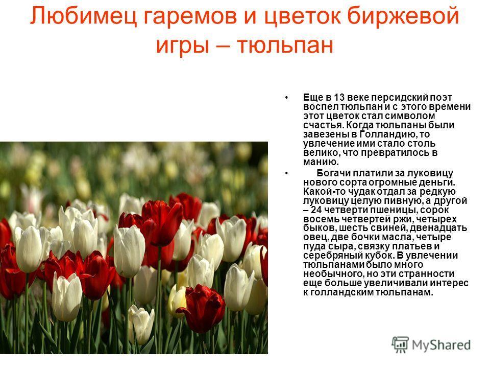 Любимец гаремов и цветок биржевой игры – тюльпан Еще в 13 веке персидский поэт воспел тюльпан и с этого времени этот цветок стал символом счастья. Когда тюльпаны были завезены в Голландию, то увлечение ими стало столь велико, что превратилось в манию