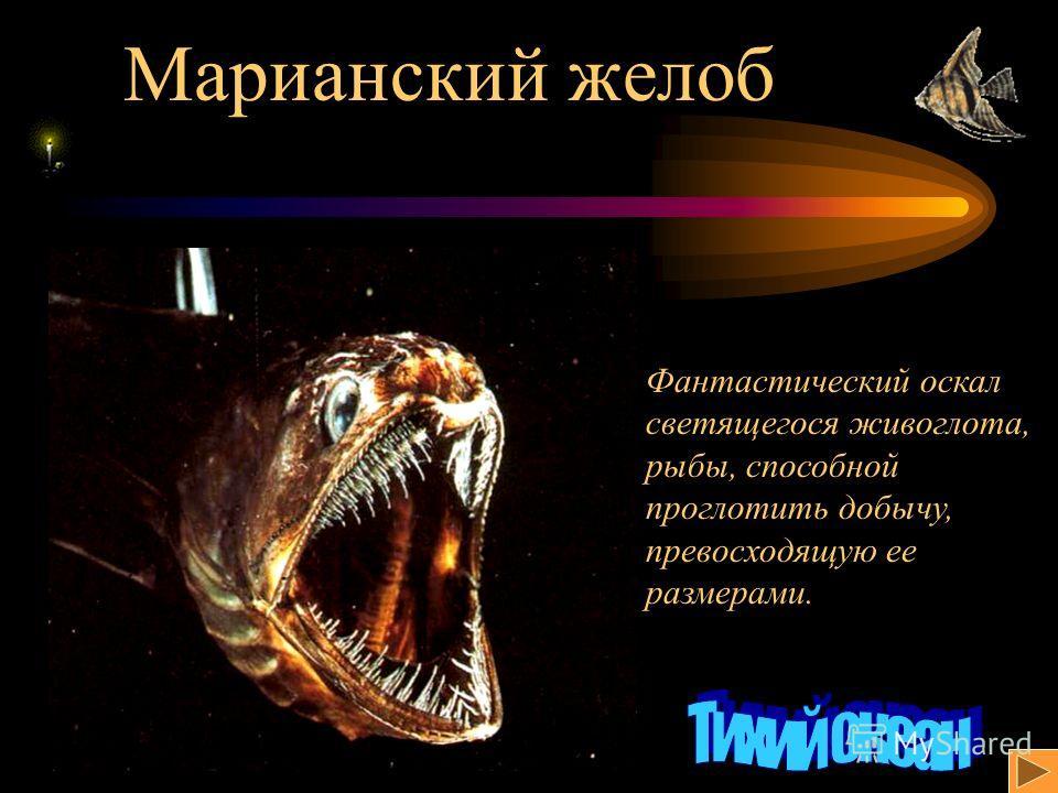Марианский желоб Фантастический оскал светящегося живоглота, рыбы, способной проглотить добычу, превосходящую ее размерами.
