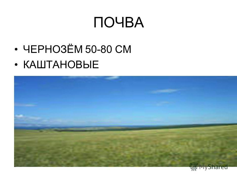 ПОЧВА ЧЕРНОЗЁМ 50-80 СМ КАШТАНОВЫЕ