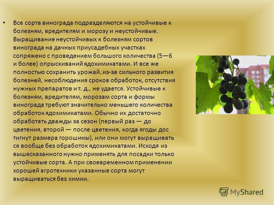 Все сорта винограда подразделяются на устойчивые к болезням, вредителям и морозу и неустойчивые. Выращивание неустойчивых к болезням сортов винограда на дачных приусадебных участках сопряжено с проведением большого количества (56 и более) опрыскивани