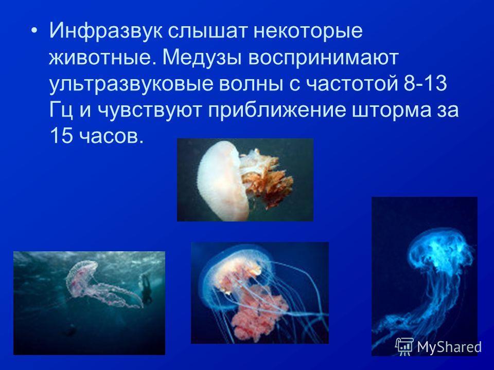 Инфразвук слышат некоторые животные. Медузы воспринимают ультразвуковые волны с частотой 8-13 Гц и чувствуют приближение шторма за 15 часов.