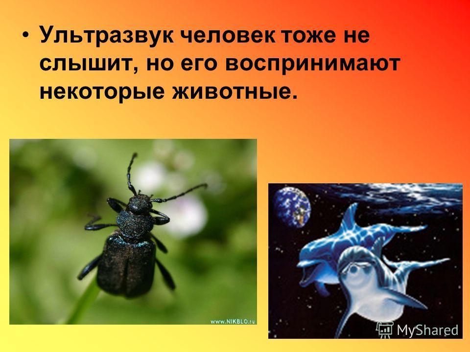 Ультразвук человек тоже не слышит, но его воспринимают некоторые животные.