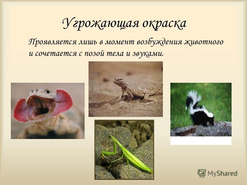 Угрожающая окраска Проявляется лишь в момент возбуждения животного и сочетается с позой тела и звуками.
