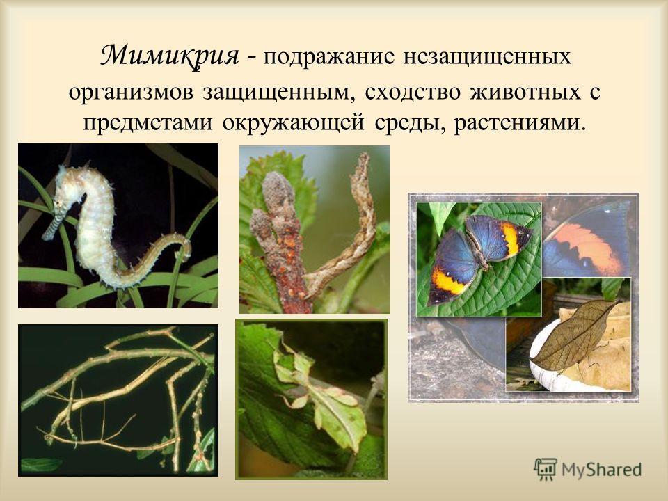Мимикрия - подражание незащищенных организмов защищенным, сходство животных с предметами окружающей среды, растениями.