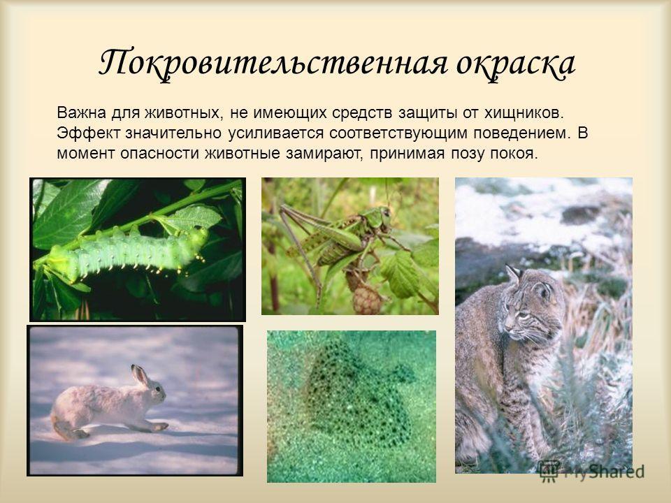 Покровительственная окраска Важна для животных, не имеющих средств защиты от хищников. Эффект значительно усиливается соответствующим поведением. В момент опасности животные замирают, принимая позу покоя.