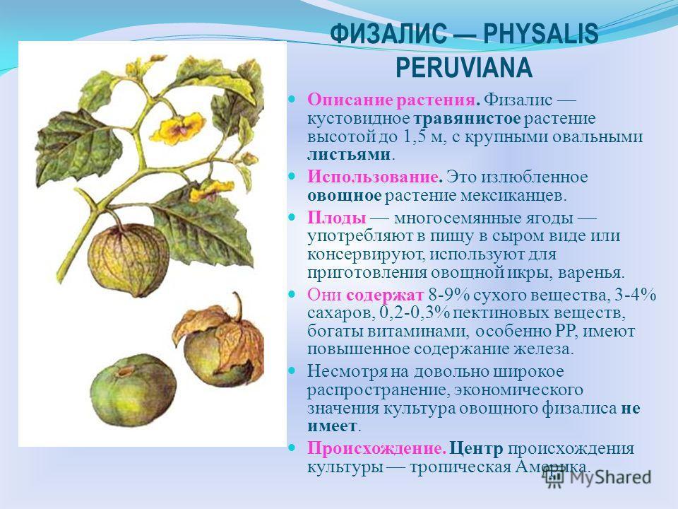 БАКЛАЖАН SOLANUM MELONGENA Использование. Баклажан третья по значимости культура из семейства Пасленовые. В свежих плодах баклажана содержится 7% углеводов, 1% белков, 1,3 мг/100 г железа, 0,05 мг/ 100 г тиамина, 0,05 мг/100 г рибофлавина, 0,5 мг/100