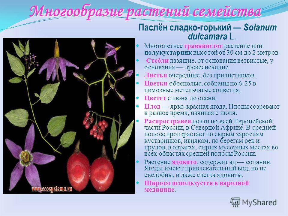 Признаки семейства Корень – стержневой Стебель – прямостоячий Жилкование – сетчатое Листорасположение – очерёдное. Формула цветка – Ч ( 5 ) Л ( 5 ) Т 5 П 1 Соцветие – кисть. Плод – ягода (паслён чёрный, томат), коробочка (табак, петуния гибридная, бе