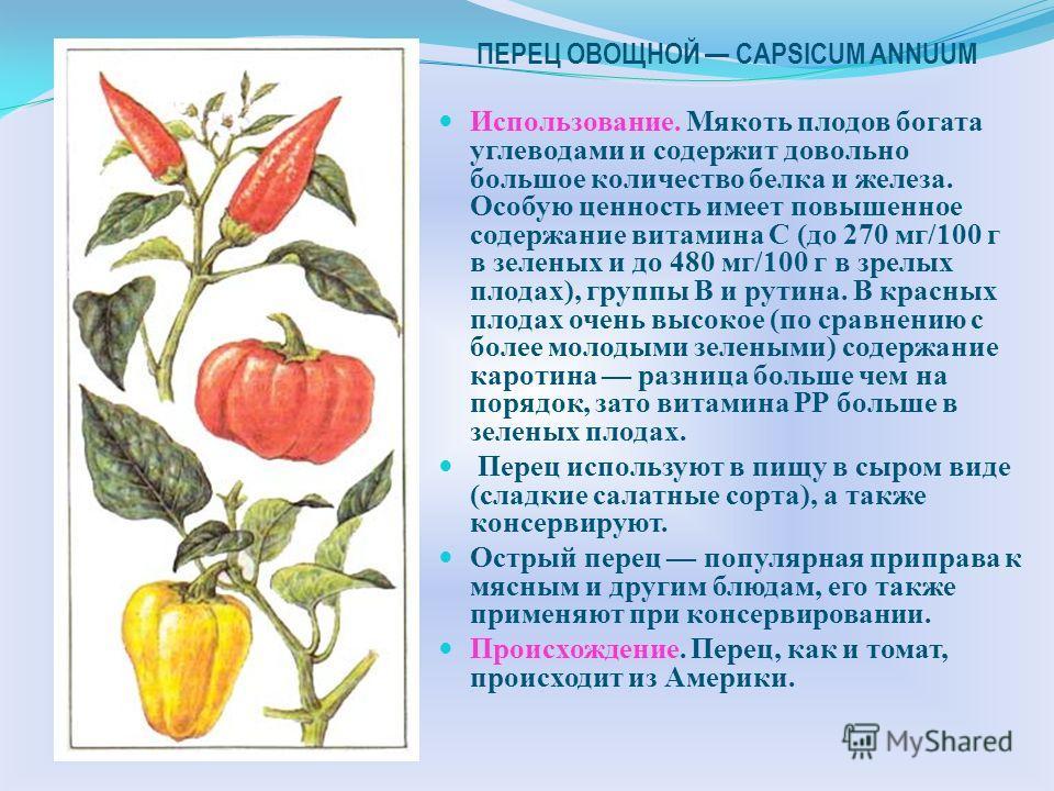 ТОМАТ LYCOPERSICON ESCULENTUM Использование. Томаты едят сырыми, жареными, вареными, консервированными, в виде соусов, отдельно или вместе с другими блюдами. Плоды широко используют для консервирования: из них готовят пасты, соки, соусы, порошки. Сем