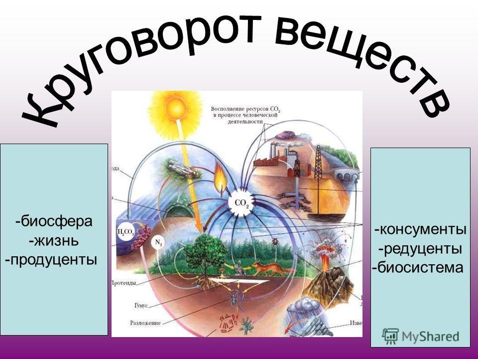 -биосфера -жизнь -продуценты