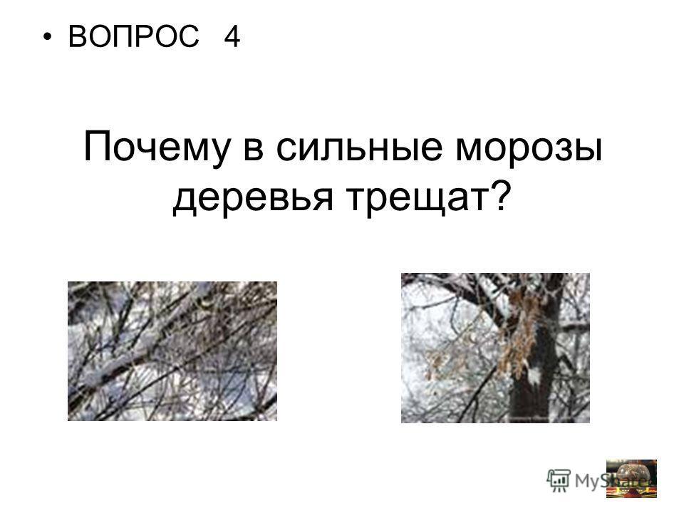 Почему в сильные морозы деревья трещат? ВОПРОС 4