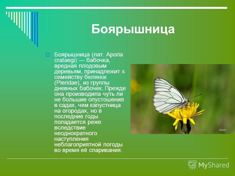 Боярышница Боярышница (лат. Aporia crataegi) бабочка, вредная плодовым деревьям, принадлежит к семейству белянок (Pieridae), из группы дневных бабочек. Прежде она производила чуть ли не большие опустошения в садах, чем капустница на огородах, но в по