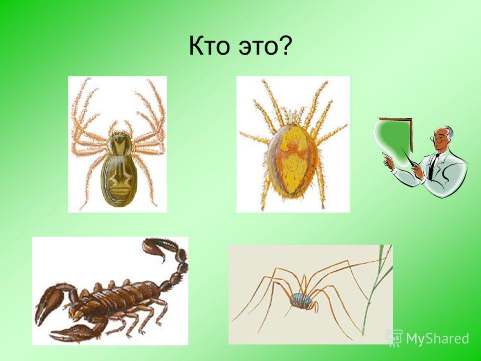Допишите предложения или вставьте пропущенные слова Класс паукообразные относится к типу……………… Класс паукообразные включает в себя …отряда. Это………,…………,………..,………. У паукообразных ….. пары ходильных ног. Наука, занимающаяся изучением пауков называется