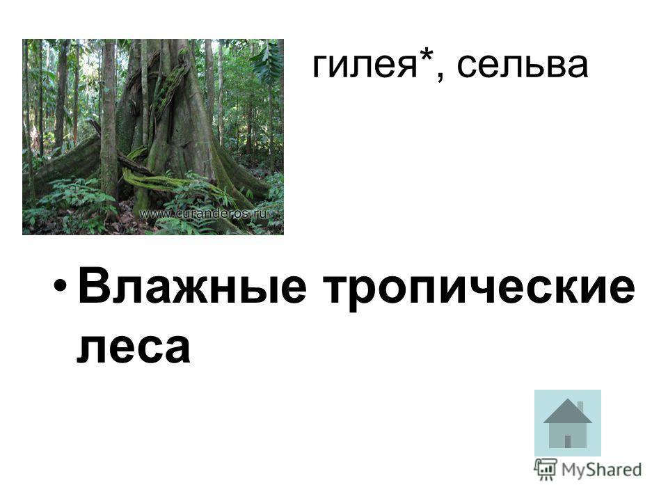 Влажные тропические леса гилея*, сельва