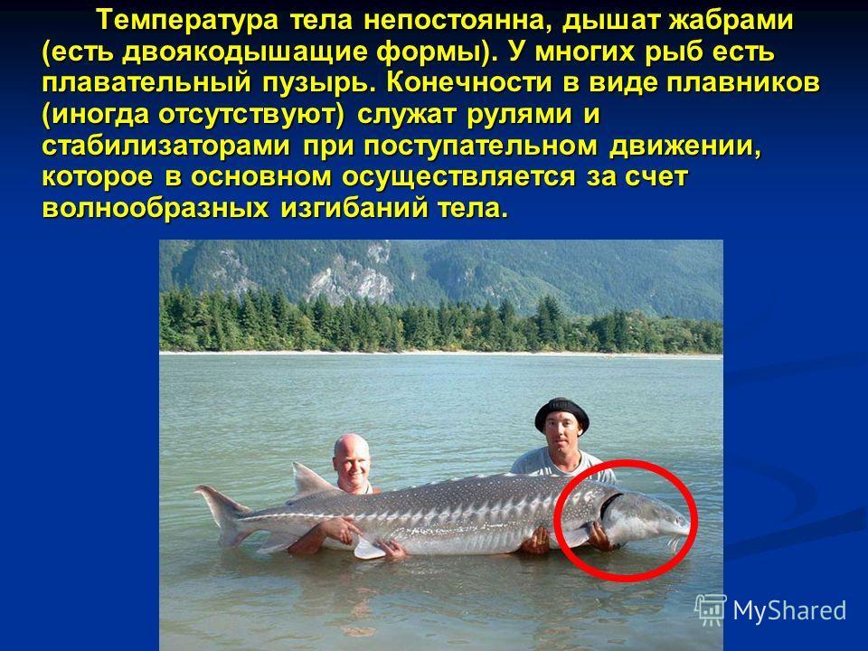 Температура тела непостоянна, дышат жабрами (есть двоякодышащие формы). У многих рыб есть плавательный пузырь. Конечности в виде плавников (иногда отсутствуют) служат рулями и стабилизаторами при поступательном движении, которое в основном осуществля