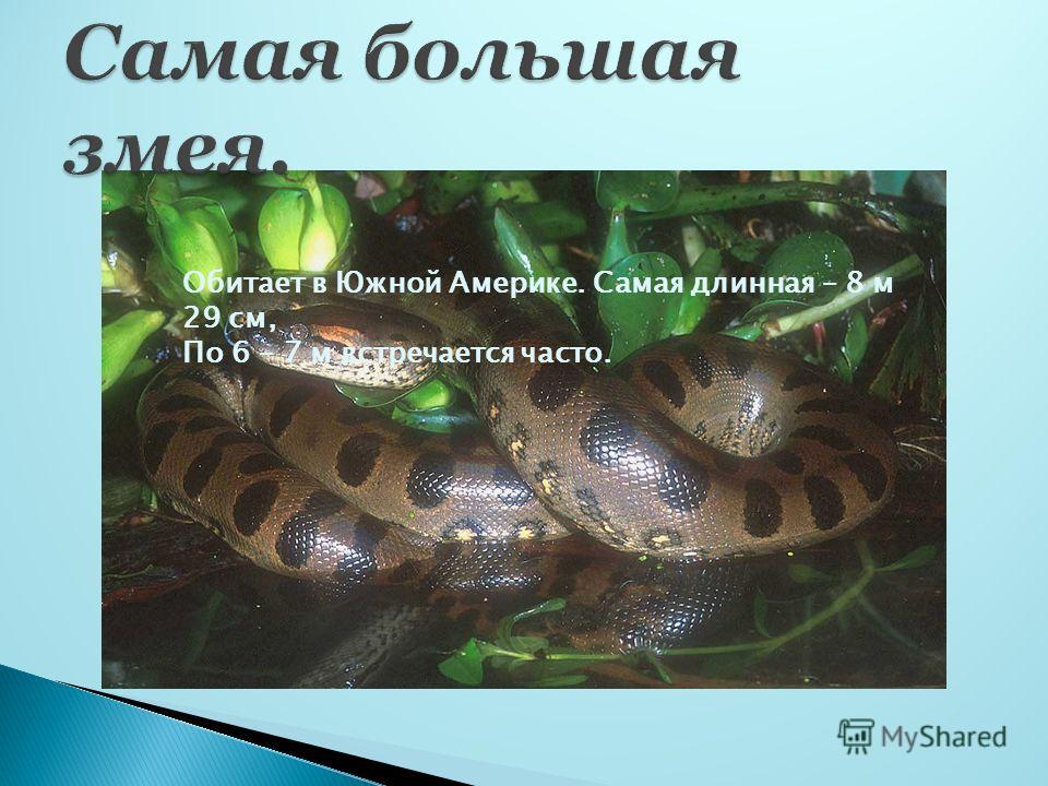Обитает в Южной Америке. Самая длинная – 8 м 29 см, По 6 – 7 м встречается часто.