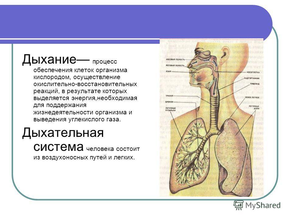 Дыхание процесс обеспечения клеток организма кислородом, осуществление окислительно-восстановительных реакций, в результате которых выделяется энергия,необходимая для поддержания жизнедеятельности организма и выведения углекислого газа. Дыхательная с