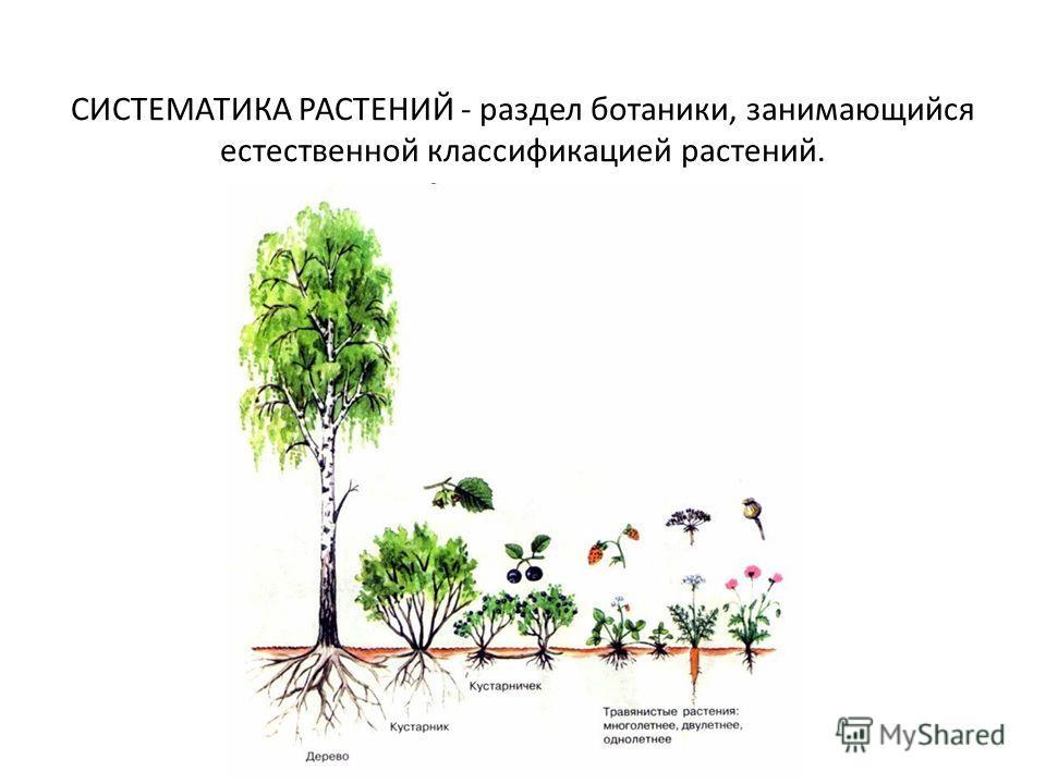 СИСТЕМАТИКА РАСТЕНИЙ - раздел ботаники, занимающийся естественной классификацией растений.