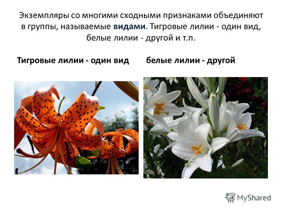Экземпляры со многими сходными признаками объединяют в группы, называемые видами. Тигровые лилии - один вид, белые лилии - другой и т.п. Тигровые лилии - один видбелые лилии - другой