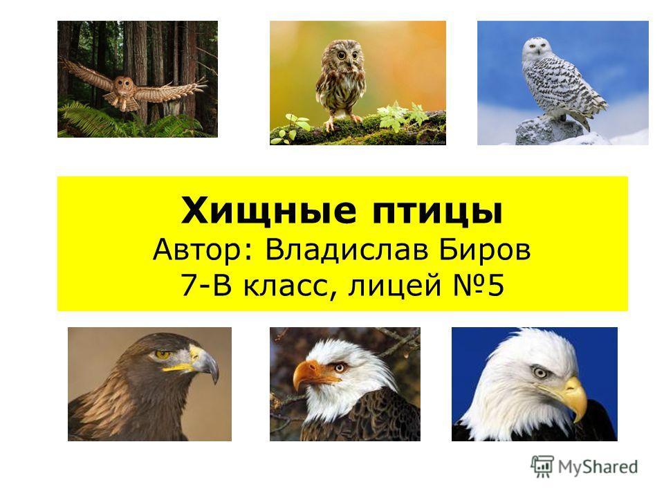 Хищные птицы Автор: Владислав Биров 7-В класс, лицей 5