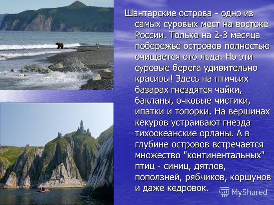 Шантарские острова - одно из самых суровых мест на востоке России. Только на 2-3 месяца побережье островов полностью очищается ото льда. Но эти суровые берега удивительно красивы! Здесь на птичьих базарах гнездятся чайки, бакланы, очковые чистики, ип