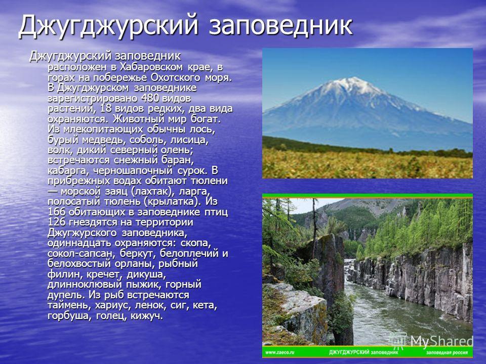 Джугджурский заповедник Джугджурский заповедник расположен в Хабаровском крае, в горах на побережье Охотского моря. В Джугджурском заповеднике зарегистрировано 480 видов растений, 18 видов редких, два вида охраняются. Животный мир богат. Из млекопита