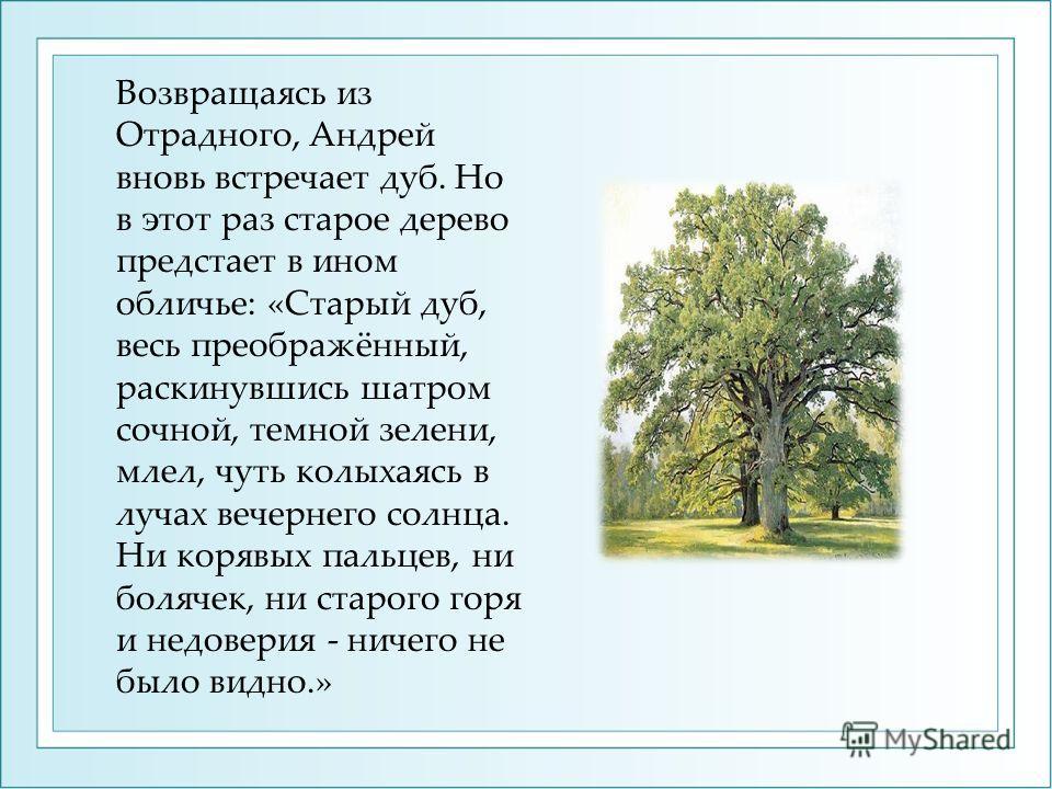 Возвращаясь из Отрадного, Андрей вновь встречает дуб. Но в этот раз старое дерево предстает в ином обличье: «Старый дуб, весь преображённый, раскинувшись шатром сочной, темной зелени, млел, чуть колыхаясь в лучах вечернего солнца. Ни корявых пальцев,