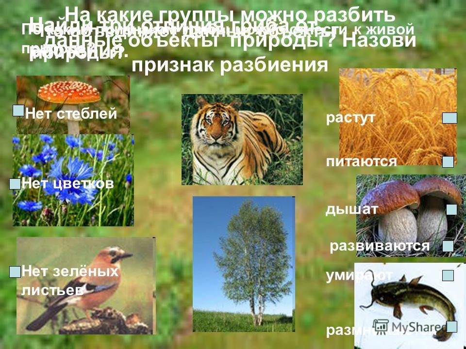 На какие группы можно разбить данные объекты природы? Назови признак разбиения Что объединяет данные объекты природы? Найди три отличия гриба от растения. Нет стеблей Нет цветков Нет зелёных листьев По каким признакам грибы можно отнести к живой прир