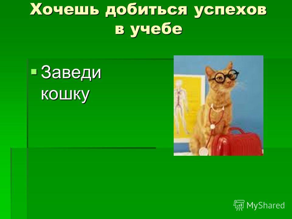 Хочешь добиться успехов в учебе Заведи кошку Заведи кошку