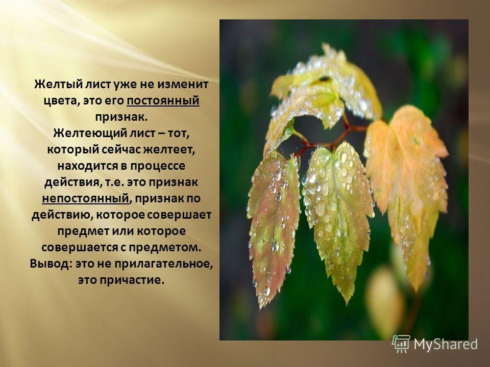 Желтый лист уже не изменит цвета, это его постоянный признак. Желтеющий лист – тот, который сейчас желтеет, находится в процессе действия, т.е. это признак непостоянный, признак по действию, которое совершает предмет или которое совершается с предмет