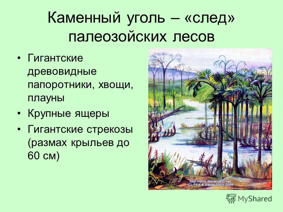 Каменный уголь – «след» палеозойских лесов Гигантские древовидные папоротники, хвощи, плауны Крупные ящеры Гигантские стрекозы (размах крыльев до 60 см)