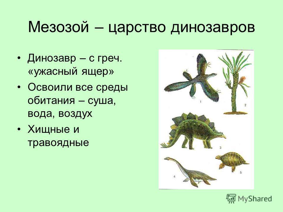 Мезозой – царство динозавров Динозавр – с греч. «ужасный ящер» Освоили все среды обитания – суша, вода, воздух Хищные и травоядные