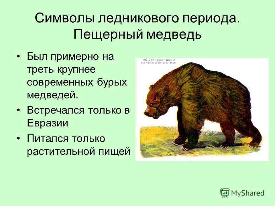 Символы ледникового периода. Пещерный медведь Был примерно на треть крупнее современных бурых медведей. Встречался только в Евразии Питался только растительной пищей