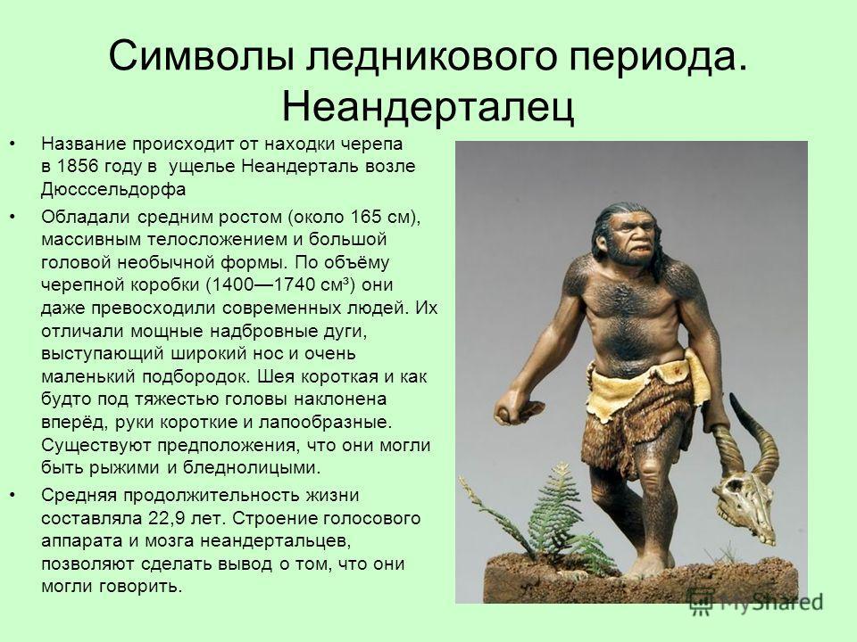 Символы ледникового периода. Неандерталец Название происходит от находки черепа в 1856 году в ущелье Неандерталь возле Дюсссельдорфа Обладали средним ростом (около 165 см), массивным телосложением и большой головой необычной формы. По объёму черепной