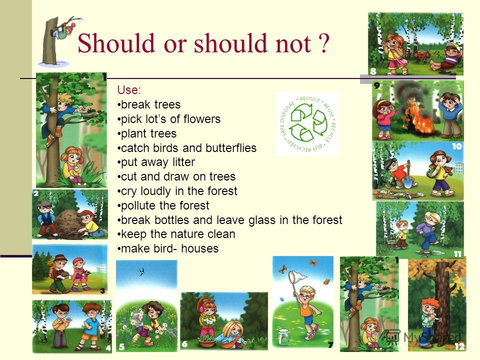 Should or should not ? Use: break trees pick lots of flowers plant trees catch birds and butterflies put away litter cut and draw on trees cry loudly in the forest pollute the forest break bottles and leave glass in the forest keep the nature clean m