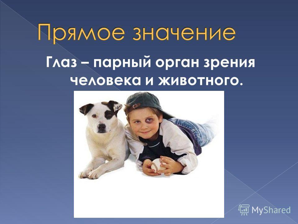 Глаз – парный орган зрения человека и животного.