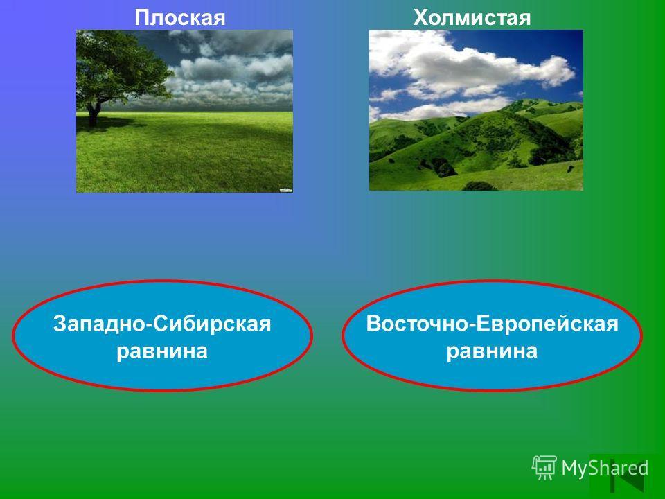 Плоская Холмистая Западно-Сибирская равнина Восточно-Европейская равнина