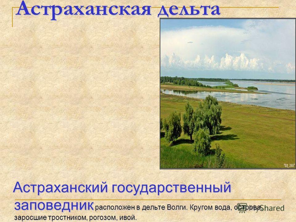 Астраханская дельта Астраханский государственный заповедник расположен в дельте Волги. Кругом вода, острова, заросшие тростником, рогозом, ивой. Астраханский государственный заповедник расположен в дельте Волги. Кругом вода, острова, заросшие тростни