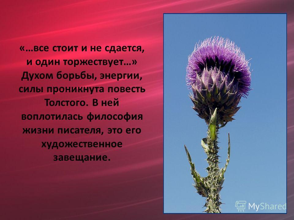 «…все стоит и не сдается, и один торжествует…» Духом борьбы, энергии, силы проникнута повесть Толстого. В ней воплотилась философия жизни писателя, это его художественное завещание.