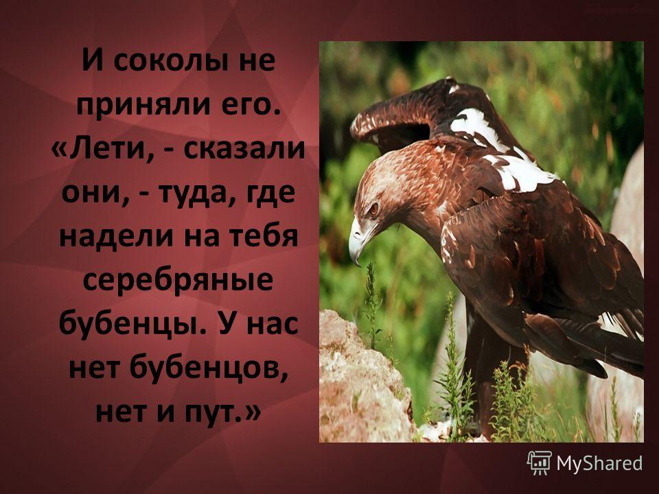 И соколы не приняли его. «Лети, - сказали они, - туда, где надели на тебя серебряные бубенцы. У нас нет бубенцов, нет и пут.»