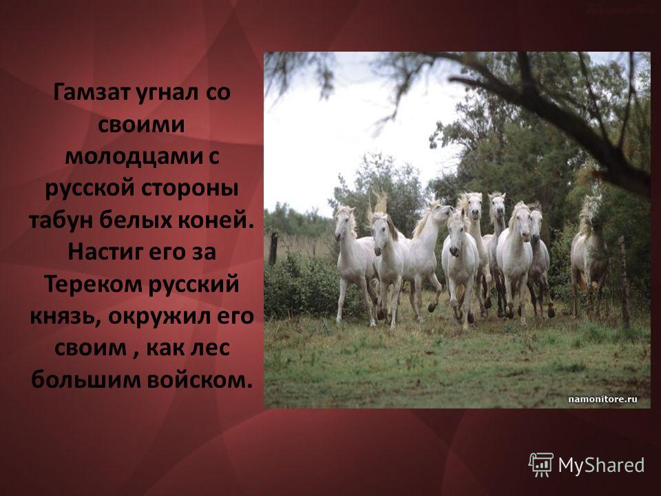 Гамзат угнал со своими молодцами с русской стороны табун белых коней. Настиг его за Тереком русский князь, окружил его своим, как лес большим войском.