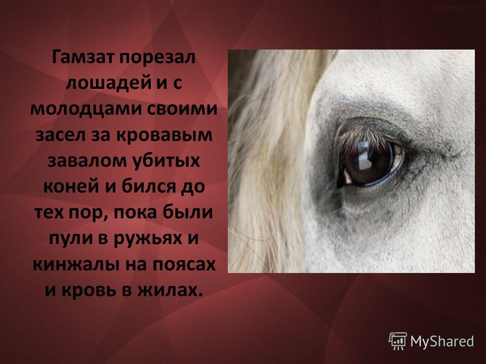 Гамзат порезал лошадей и с молодцами своими засел за кровавым завалом убитых коней и бился до тех пор, пока были пули в ружьях и кинжалы на поясах и кровь в жилах.