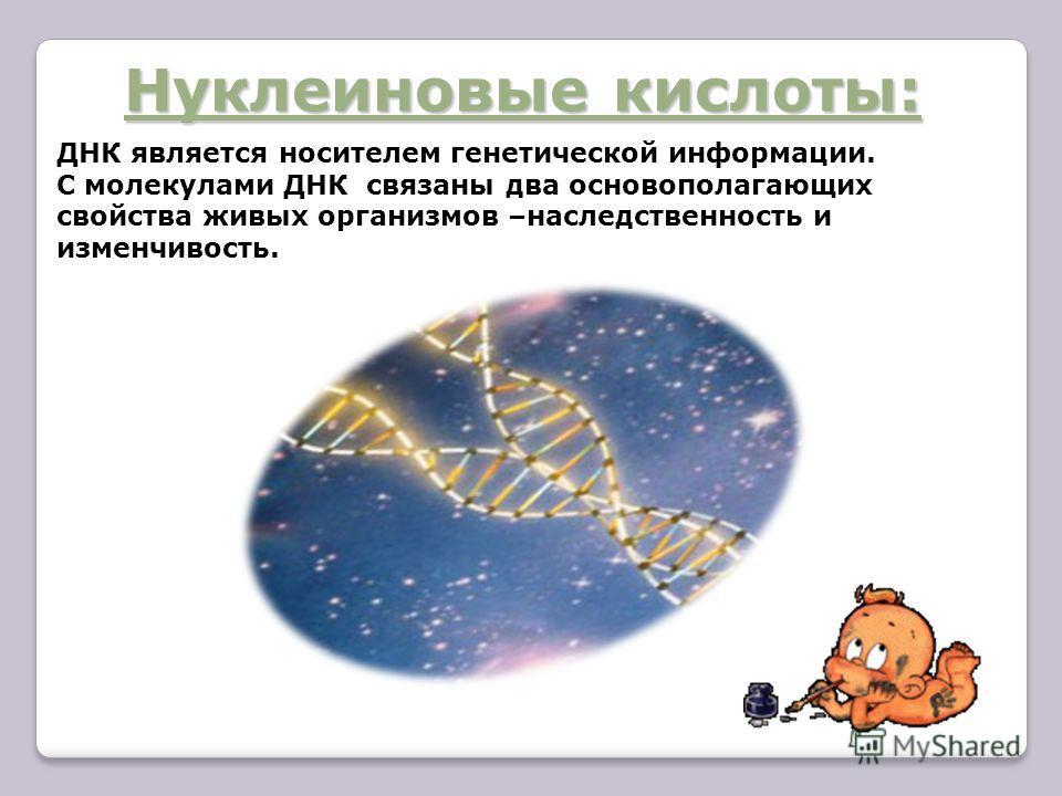 Нуклеиновые кислоты: ДНК является носителем генетической информации. С молекулами ДНК связаны два основополагающих свойства живых организмов –наследственность и изменчивость.
